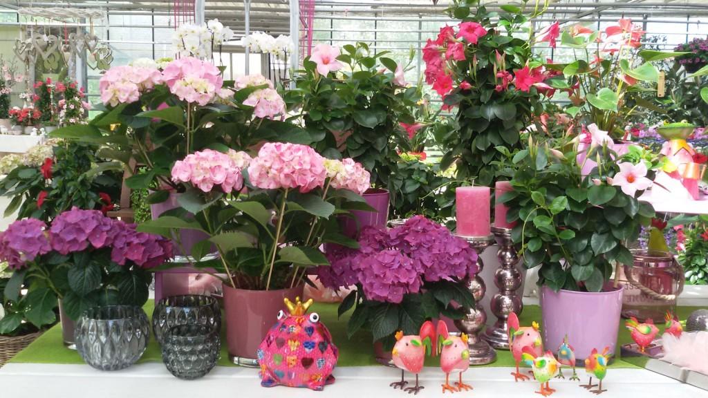 Pflanzen, Blumen, Dekoration, Frosch, Pink