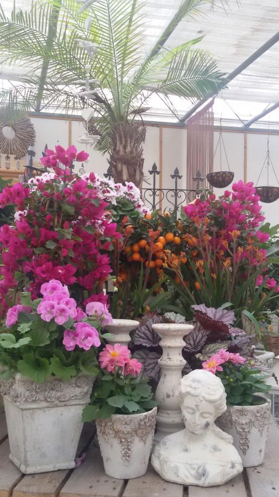 Pflanzen, Pink, Töpfe
