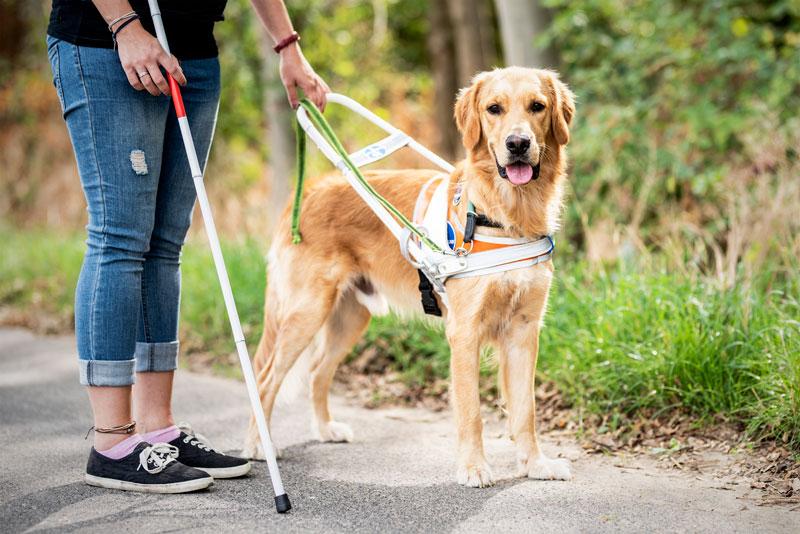 Blindenführhund – Forrest hat den Durchblick