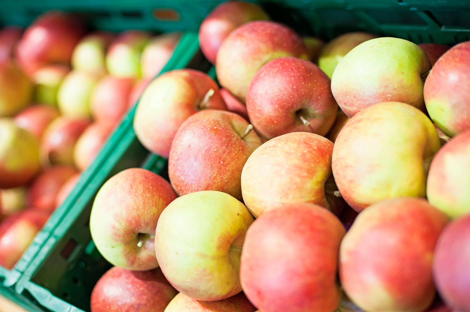 Benrader Obsthof - Eine Obst-Geschichte vom Beerentunnel und der Guten Luise