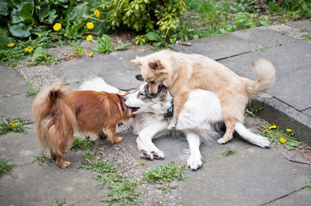 Hunde, Cuco, Yuna, Lily