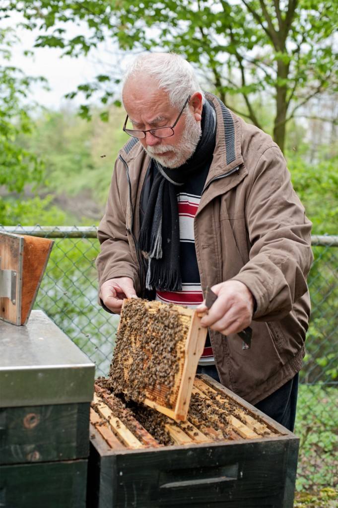 Horst Schnitzler, Bienen, Waben
