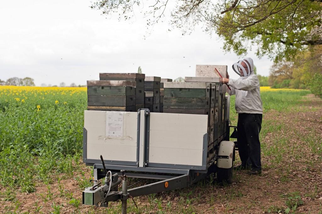 Wagen, Bienenwaben
